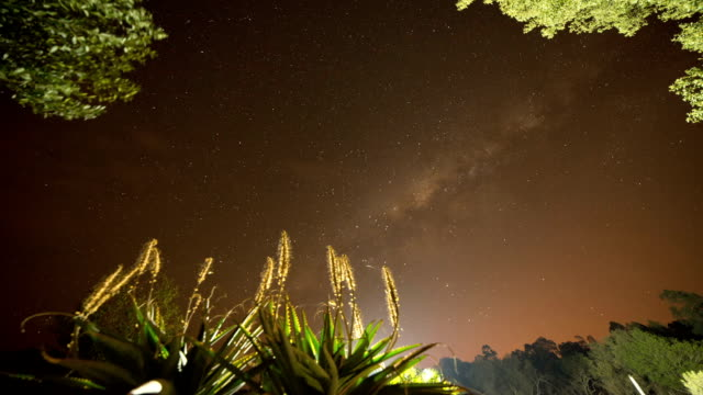 African night sky time lapse with plants in foreground, tracking shot video