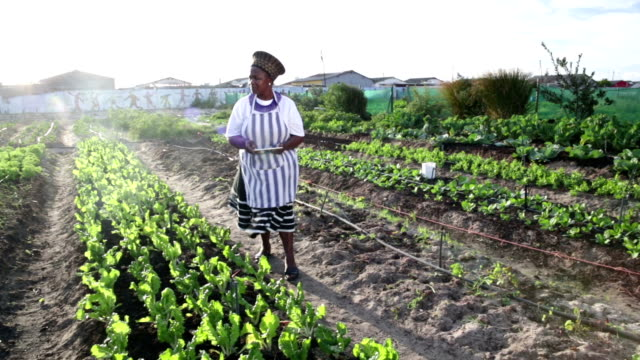African organic garden business owner  digital tablet video
