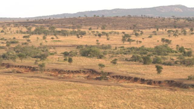 AERIAL: African savannah landscape during dry season at golden light sunset video