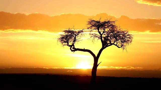 vídeos de stock e filmes b-roll de lapso de tempo do nascer do sol - - quénia