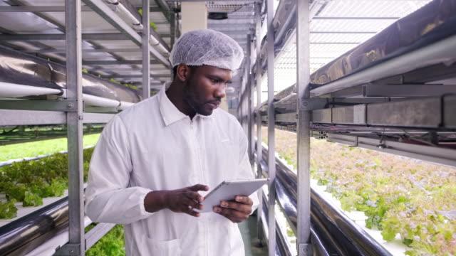 afrika dikey çiftçi incelenmesi kapalı bitki geliştirme - plant stem stok videoları ve detay görüntü çekimi