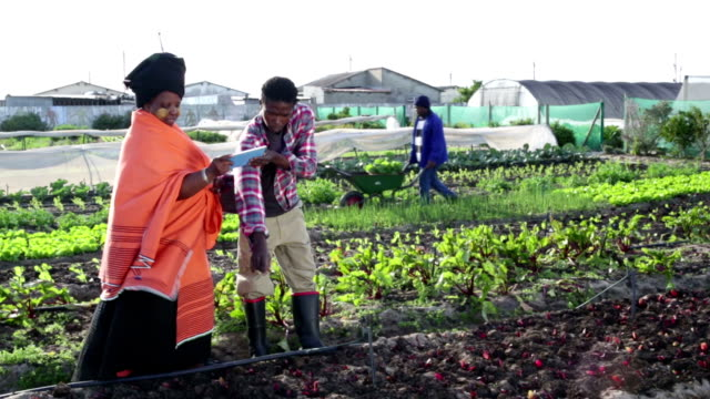 African woman discusses over digital tablet in organic farm video