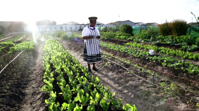 African woman organic farmer with digital tablet video