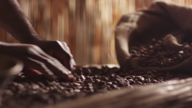african worker is sorting coffee bean - coffee farmer video stock e b–roll