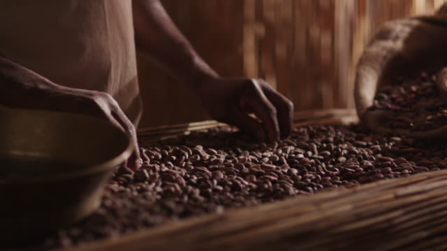 African Worker Is Sorting Coffee Bean. video