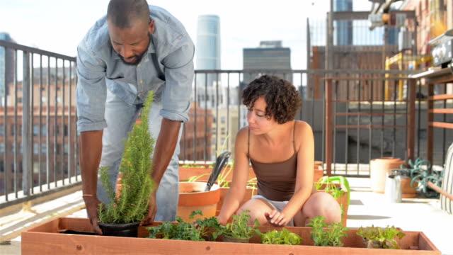 african-american paar dach gartenarbeit - dolly schuss - dachgarten videos stock-videos und b-roll-filmmaterial