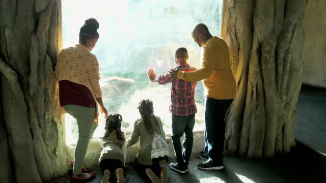 vidéos et rushes de famille afro-américaine de cinq au zoo, gorille - zoo