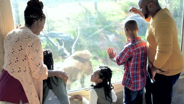afroamerikanische fünfköpfige familie im zoo, gorilla - zoo stock-videos und b-roll-filmmaterial