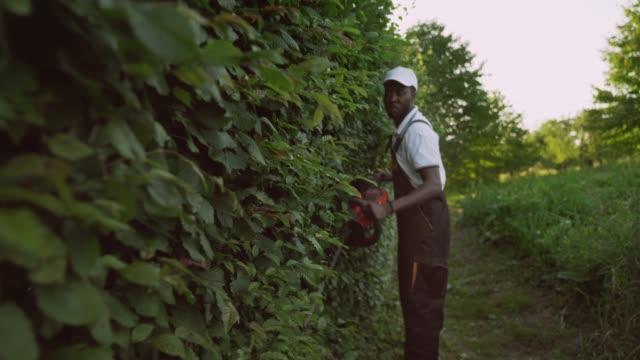 afroamerican gargener schneiden hecke. - gärtnerisch gestaltet stock-videos und b-roll-filmmaterial