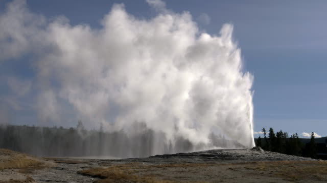 afternoon shot of old faithful erupting in yellowstone