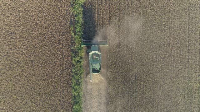 agribusiness, aerial view agricultural machine harvesting of ripe soybeans on field agribusiness, aerial view of agricultural machine harvesting of ripe soybeans on field monoculture stock videos & royalty-free footage