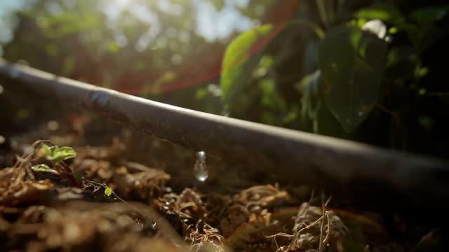 vidéos et rushes de ferme de agricultura rega - arroser