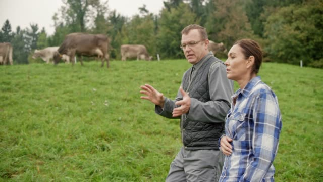Agricultural consultant advising a female farmer as they walk in the pasture checking the cattle Wide handheld shot of a male agricultural consultant advising a female farmer as they walk in the pasture and observing the cattle. Shot in Slovenia. pasture stock videos & royalty-free footage