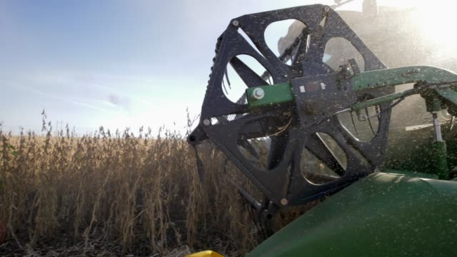 agricultural equipment in dust, harvesting of soybeans in the field close up at autumn season agricultural equipment in the dust, harvesting of soybeans in the field close up at autumn season harvesting stock videos & royalty-free footage