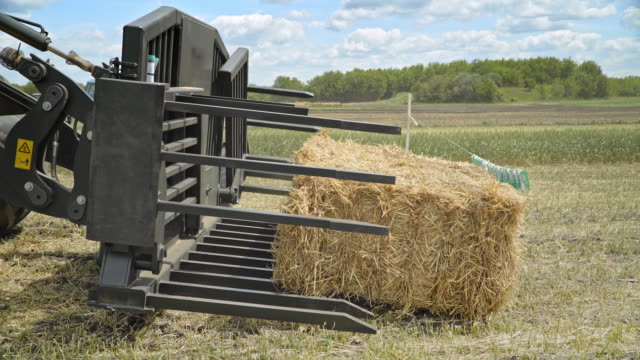 Agricultural excavator bucket. Harvesting hay. Farming machinery video