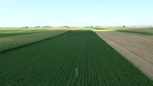 Agricultural fields, corn and soybeans video
