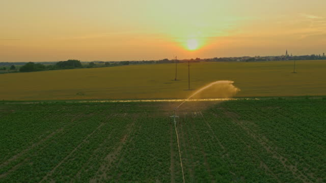 AERIAL Agricultural sprinkler spraying a field video
