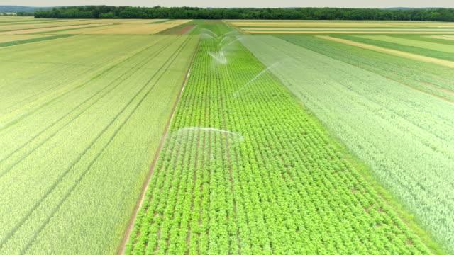 aerial agricultural sprinkler gießen grüne pflanzen - bewässerungsanlage stock-videos und b-roll-filmmaterial