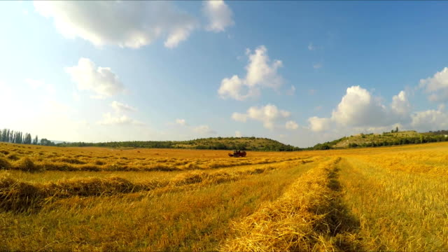 Agricultural works with combine harvester in the field The camera moves, approaching a harvester harvesting wheat monoculture stock videos & royalty-free footage
