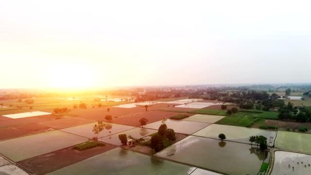 agriculture 360 degree rotation view by drone - pole ryżowe filmów i materiałów b-roll