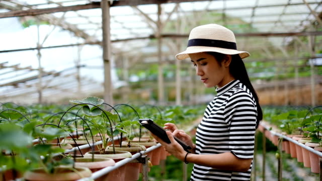 Agriculture: Asian Woman Farmer With A Digital Tablet In The Field, Smart agriculture and technology concept video