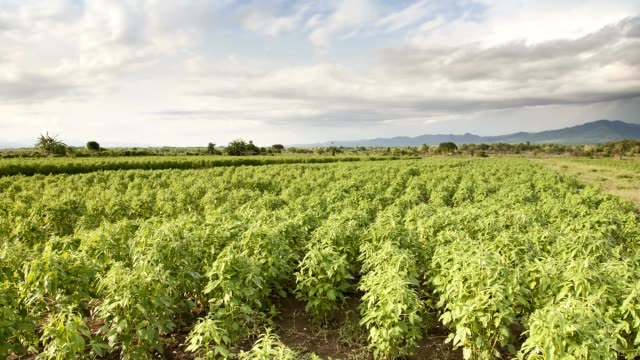 agriculture farm time lapse