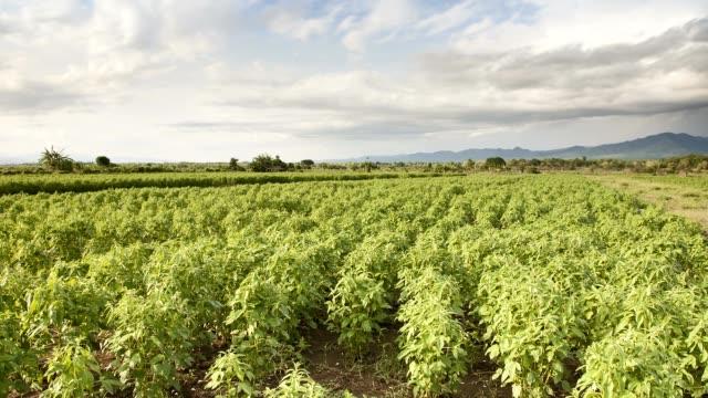 agriculture farm time lapse - sesamo video stock e b–roll