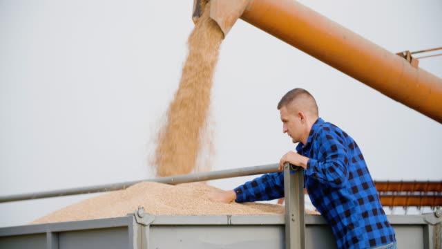 сельскохозяйственный фермер, работающий на ферме во время уборки пшеницы - сельскохозяйственная машина стоковые видео и кадры b-roll