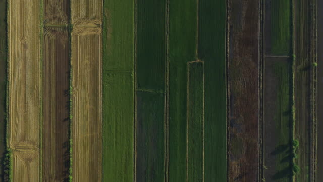 Agriculture field pattern aerial view