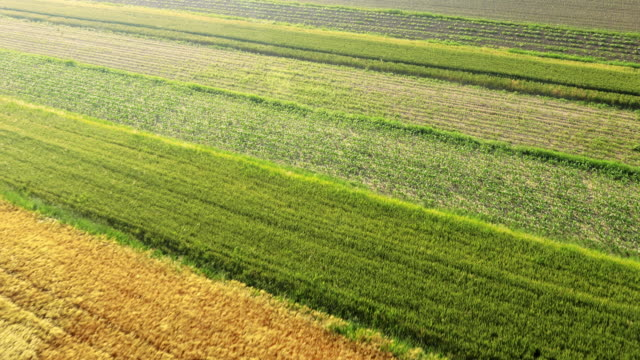 AERIAL Agriculture fields video
