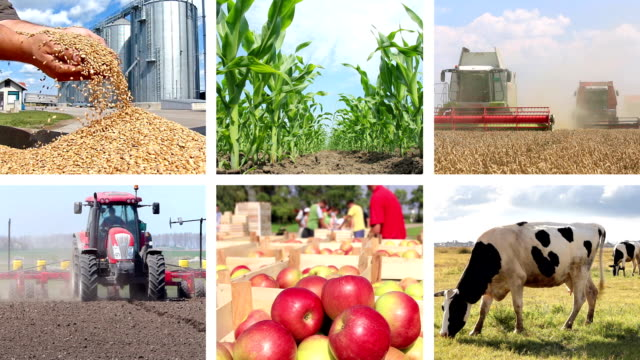 Agriculture - Food Production Collage video