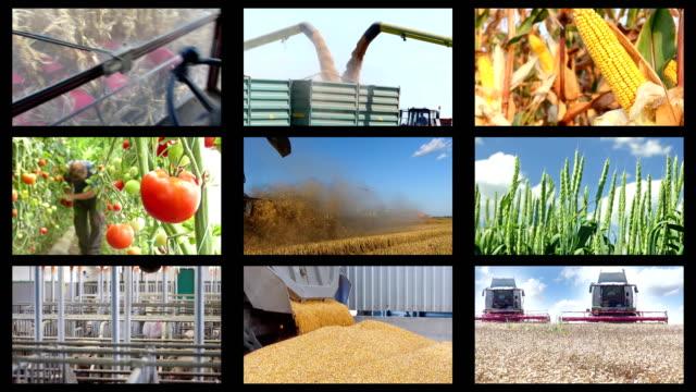 vídeos de stock e filmes b-roll de agriculture - food production montage - ordenhar