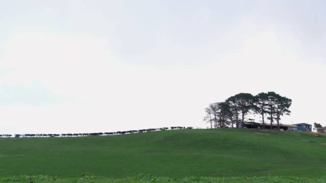 Agriculture in Australia video