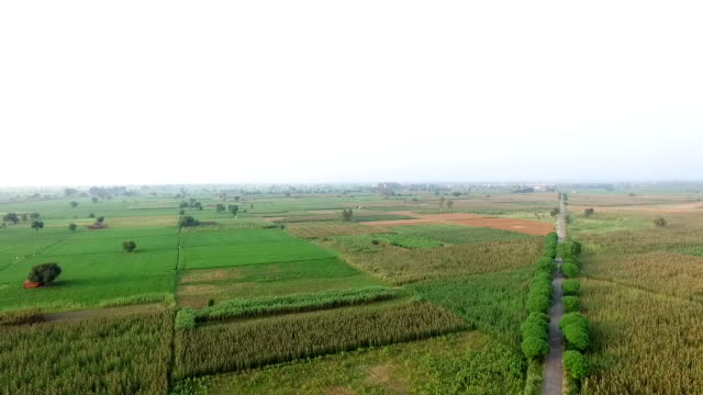 Agriculture land 360 degree view video