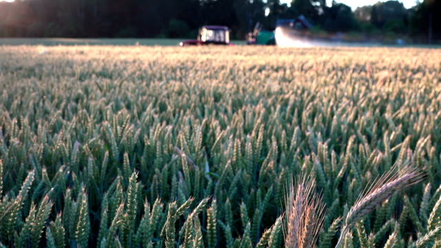vidéos et rushes de machine agricole spaying champ de blé céréales en été - herbicide