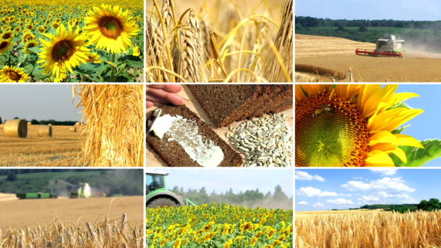 Agriculture - montage video