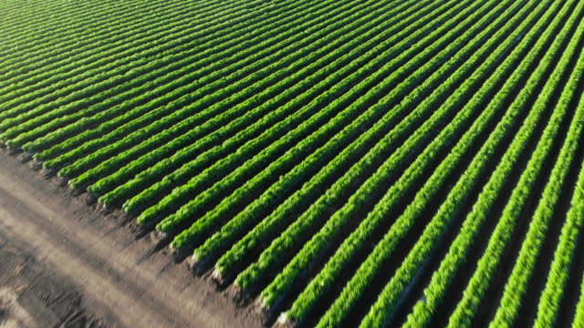 vídeos y material grabado en eventos de stock de escorrenina agrícola - estrecho