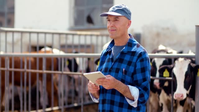 Agriculture - Successfull male farmer using digital tablet at stable, cows eating hay.