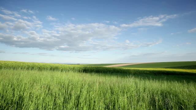 vídeos de stock e filmes b-roll de a agricultura - crucíferas