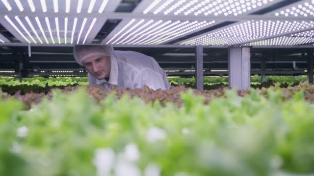 Agri-tech Specialist Examining LED Lit Living Lettuce video