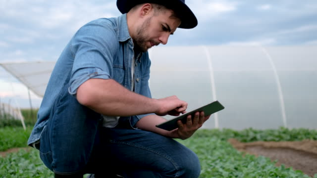 agronomist examining crops before planting - vivere semplicemente video stock e b–roll