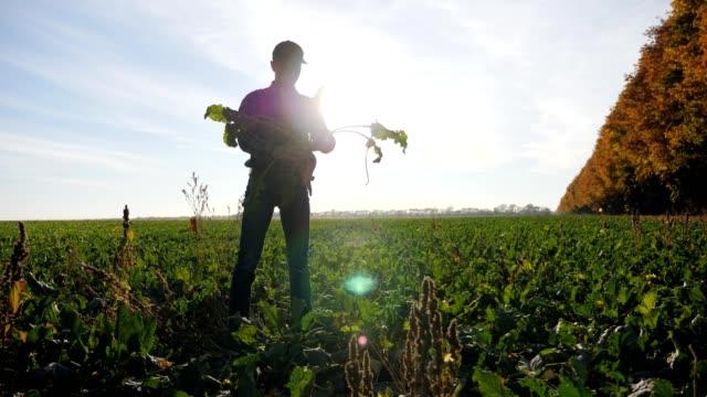 agronom hält ein wurzelgemüse von zuckerrüben - chenopodiacea stock-videos und b-roll-filmmaterial