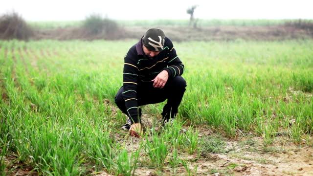 Agronomist video