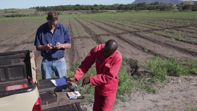 4K Agronomist/farmer checking nutrient levels in the vegetable leaves video