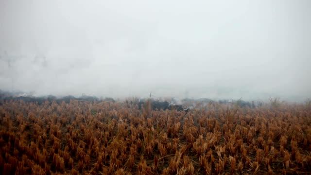大気汚染 - ハリヤナ州点の映像素材/bロール