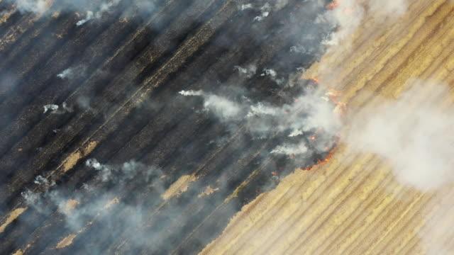 air pulltion origin ,burn field - incendio doloso video stock e b–roll