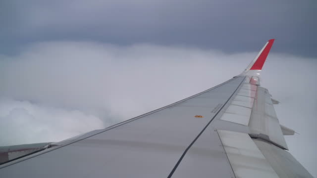 Airplane flying above the cloud and city Airplane flying above the cloud and city animal limb stock videos & royalty-free footage