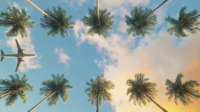 Airplane flying over palm trees. Sunset sky over tropical trees.