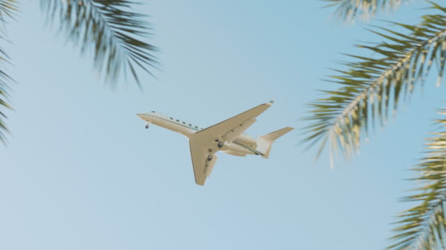 Airplane flying past palm trees on a beautiful day in Florida A small plane flying across day sky with tropical palm trees in the foreground. branch plant part stock videos & royalty-free footage