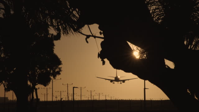 Airplane Landing At Airport Seen Through Trees